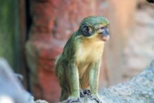 animal-india-monkey-3611