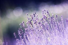 aromatherapy-beautiful-blooming-286763