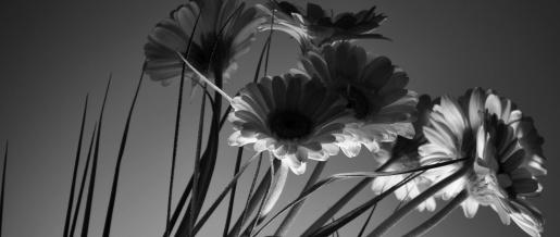 art-back-light-beautiful-301020