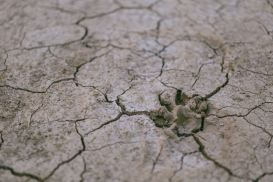 arid-calamity-crack-632252